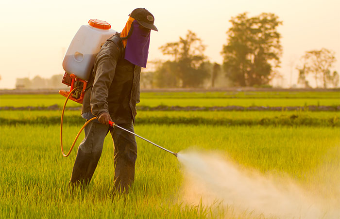glyphosate spraying