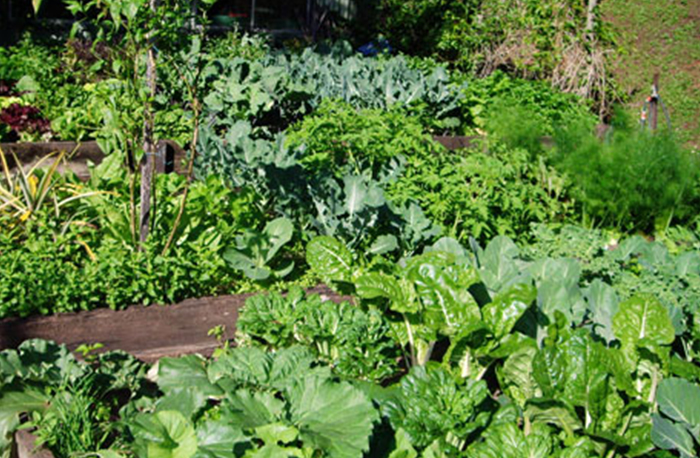 graeme vegetable garden