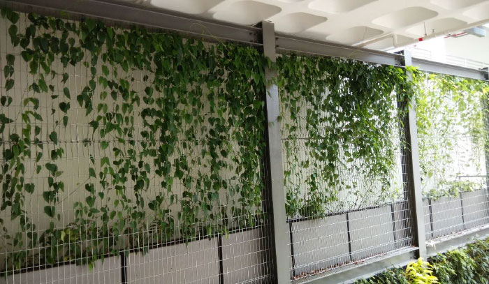 green wall post-treatment