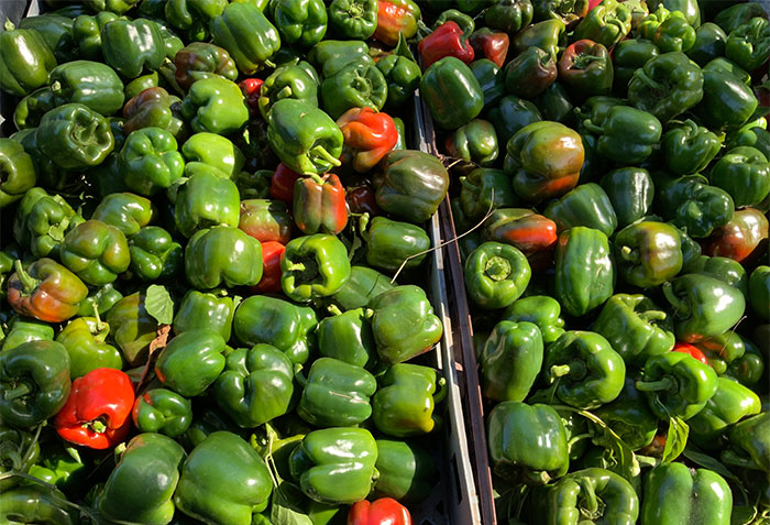 Nutrition Farms capsicums